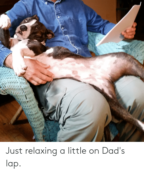 Just Relaxing: Just relaxing a little on Dad's lap.