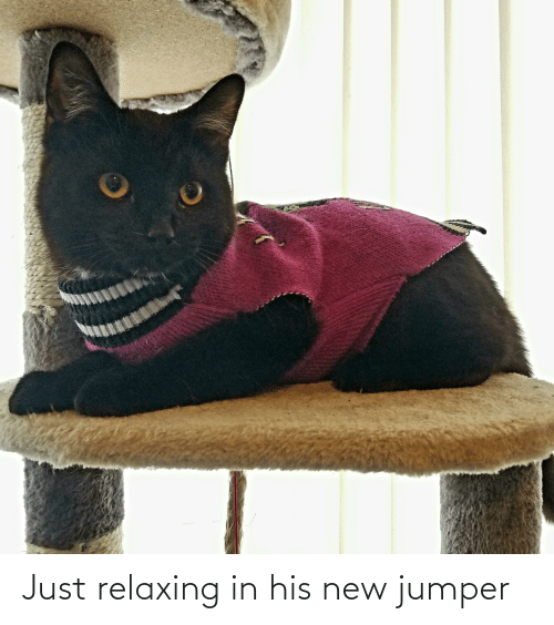 Just Relaxing: Just relaxing in his new jumper