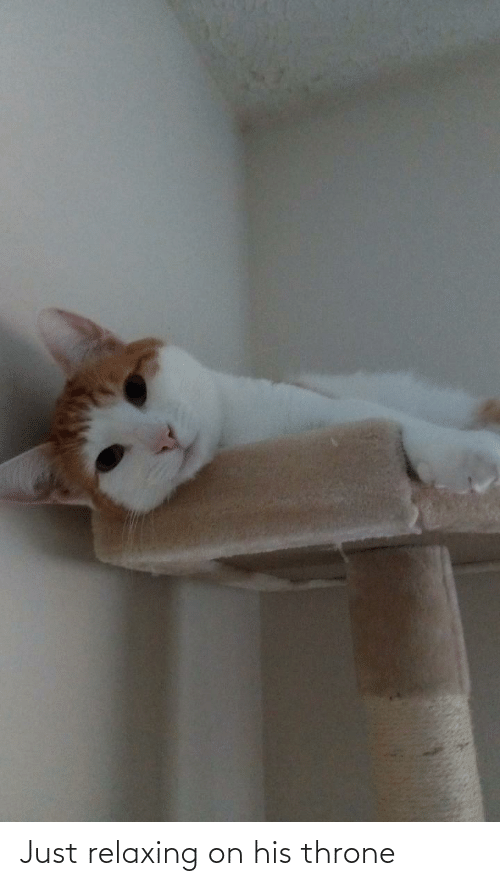 Just Relaxing: Just relaxing on his throne