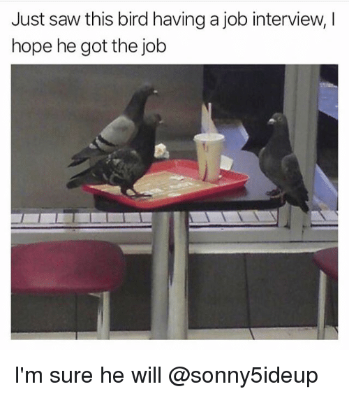 Funny, Job Interview, and Saw: Just saw this bird having a job interview, I  hope he got the job I'm sure he will @sonny5ideup
