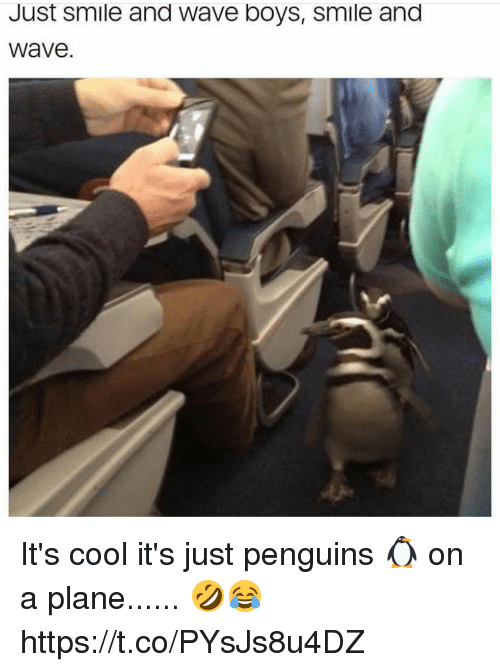 Juste: Just smile and Wave boys, smile and  Wave It's cool it's just penguins 🐧 on a plane...... 🤣😂 https://t.co/PYsJs8u4DZ