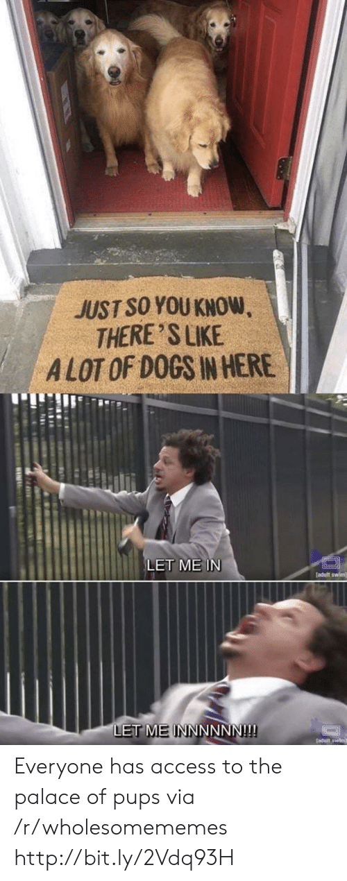Alot Of: JUST SO YOU KNOW  THERE 'S LIKE  ALOT OF DOGS IN HERE  LET ME IN  [adult swim]  LET MEINNNNNN!!! Everyone has access to the palace of pups via /r/wholesomememes http://bit.ly/2Vdq93H
