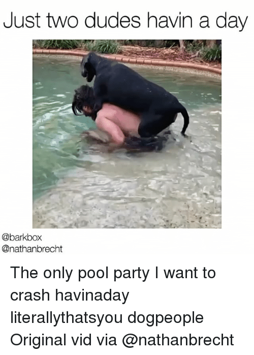 Memes, 🤖, and Crash: Just two dudes havin a day  @barkbox  @nathanbrecht The only pool party I want to crash havinaday literallythatsyou dogpeople Original vid via @nathanbrecht