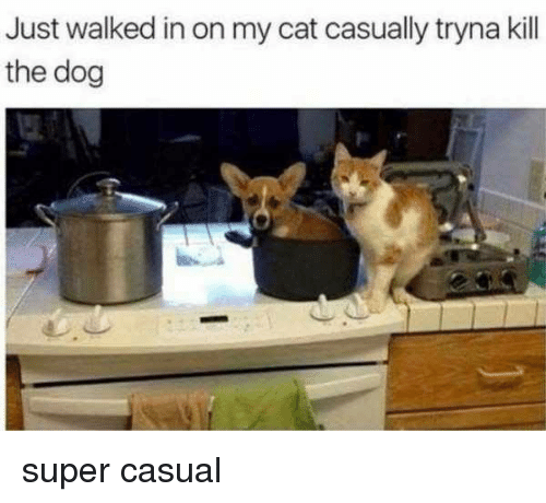 Memes, 🤖, and Super: Just walked in on my cat casually tryna kill  the dog super casual