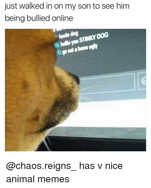 Animals Meme: just walked in on my son to see him  being bullied online  hendo dog  STINKY DOG @chaos.reigns_ has v nice animal memes