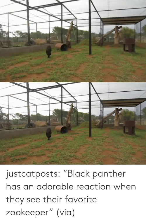 "Favorite: justcatposts:  ""Black panther has an adorable reaction when they see their favorite zookeeper"" (via)"