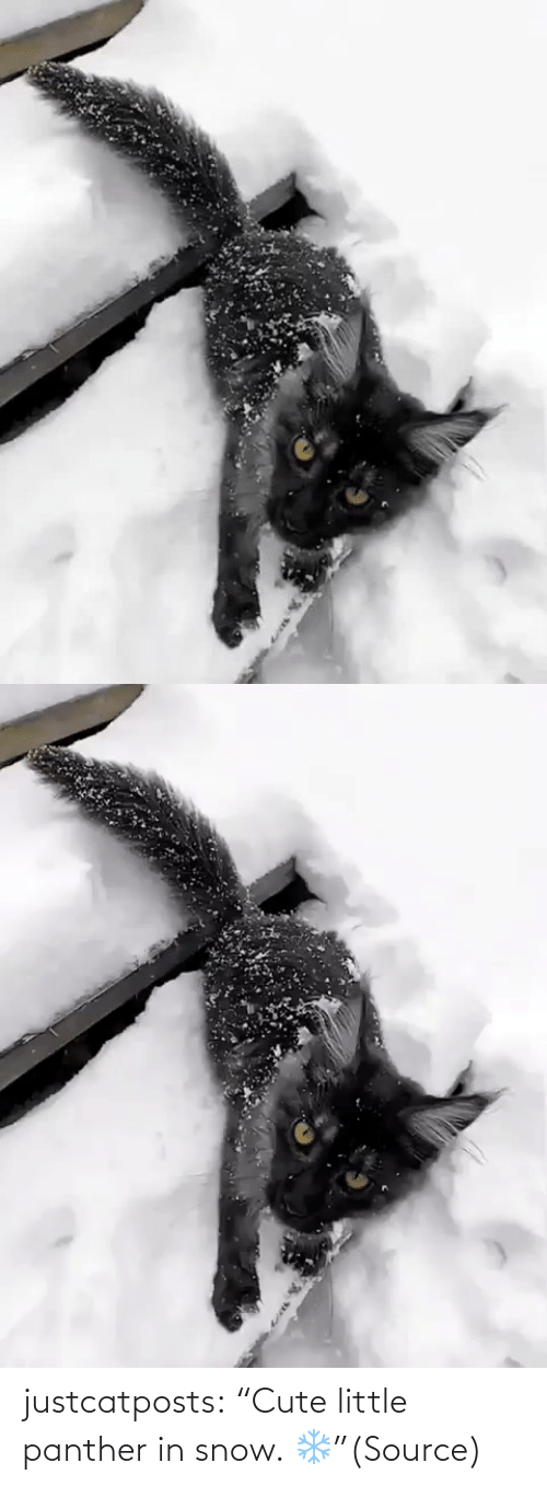 "Snow: justcatposts:  ""Cute little panther in snow. ❄️""(Source)"