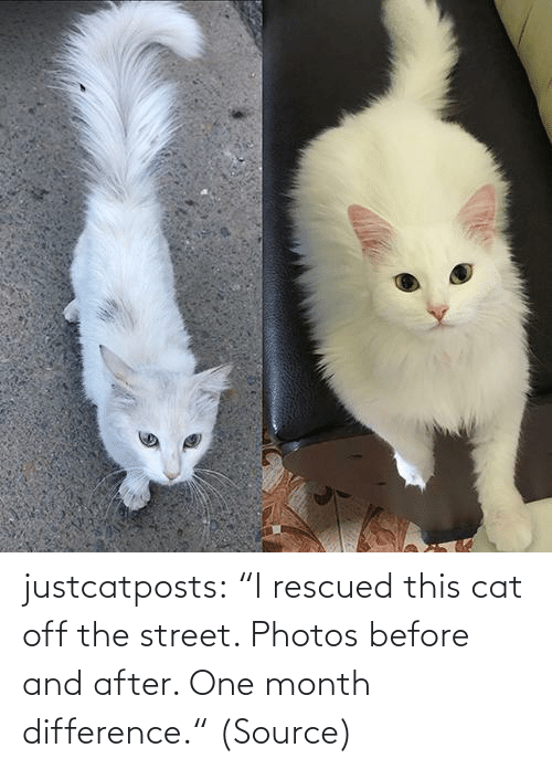 "photos: justcatposts:  ""I rescued this cat off the street. Photos before and after. One month difference."" (Source)"