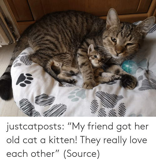 "kitten: justcatposts:  ""My friend got her old cat a kitten! They really love each other"" (Source)"