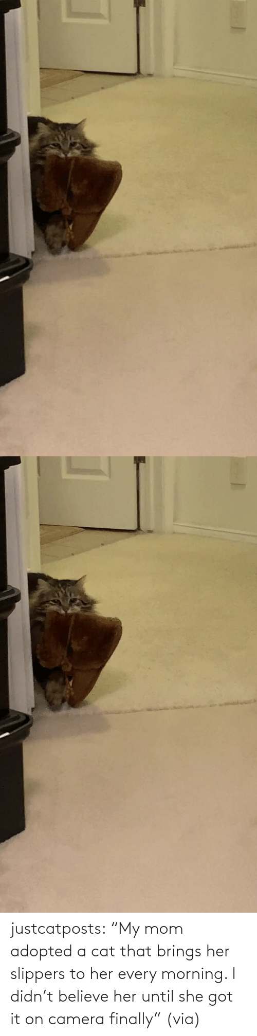 "Didn: justcatposts:  ""My mom adopted a cat that brings her slippers to her every morning. I didn't believe her until she got it on camera finally"" (via)"
