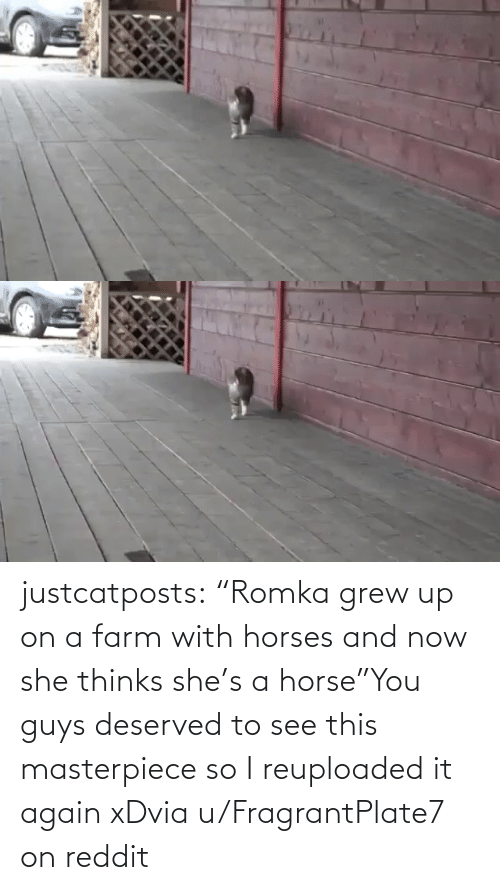 "You Guys: justcatposts:  ""Romka grew up on a farm with horses and now she thinks she's a horse""You guys deserved to see this masterpiece so I reuploaded it again xDvia u/FragrantPlate7 on reddit"