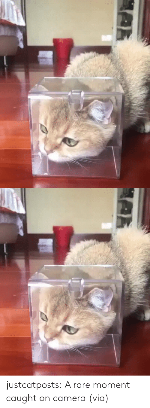 comments: justcatposts:  A rare moment caught on camera (via)