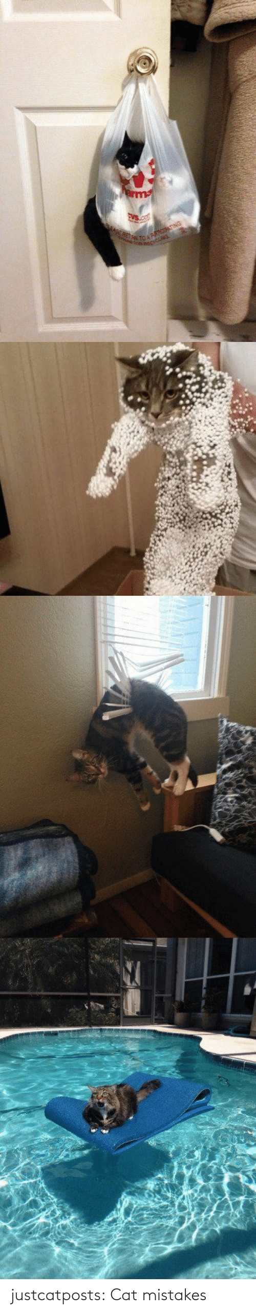 Mistakes: justcatposts:  Cat mistakes