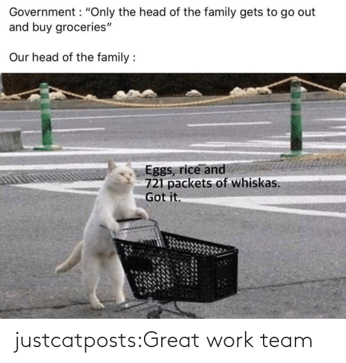 team: justcatposts:Great work team