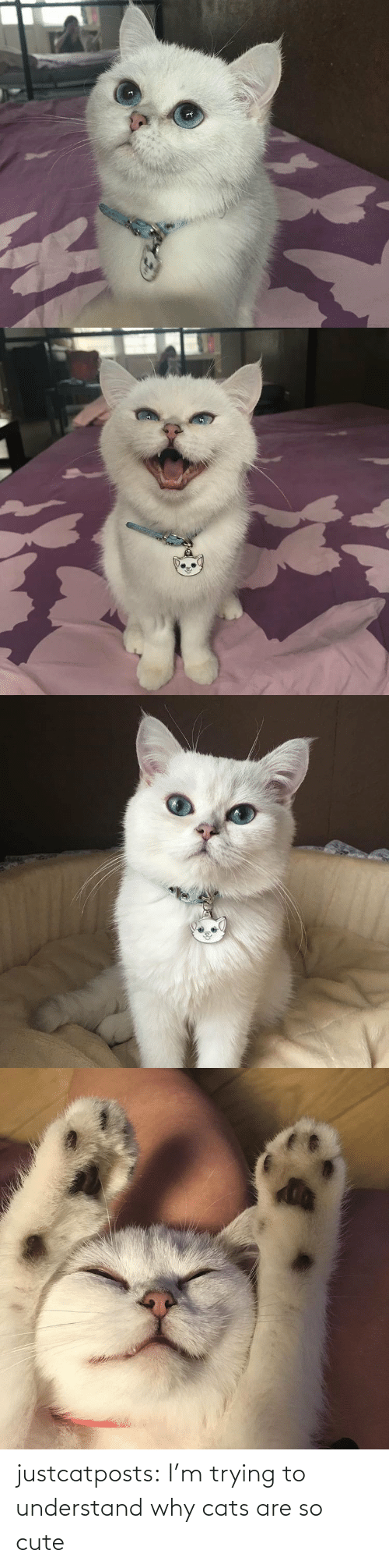why: justcatposts:  I'm trying to understand why cats are so cute