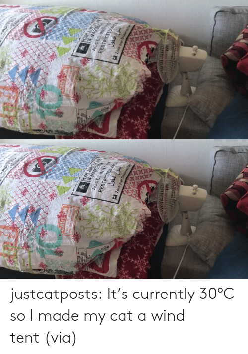 Cats: justcatposts:  It's currently 30°C so I made my cat a wind tent (via)