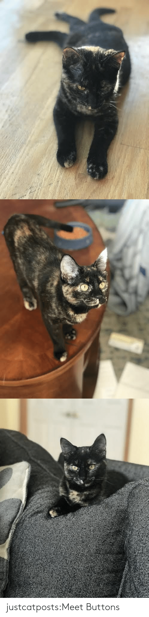 Meet: justcatposts:Meet Buttons