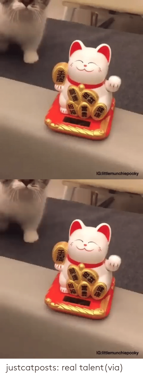 talent: justcatposts:  real talent(via)