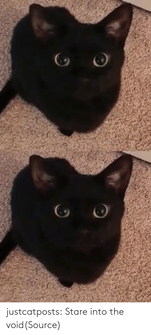 cutest: justcatposts:  Stare into the void(Source)