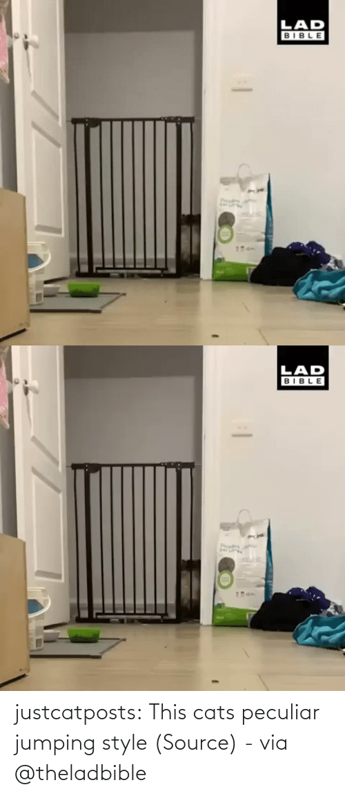 Cats: justcatposts:  This cats peculiar jumping style (Source) - via @theladbible