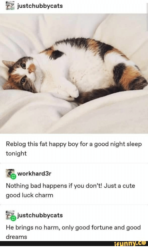 charm: justchubbycats  Reblog this fat happy boy for a good night sleep  tonight  workhard3r  Nothing bad happens if you don't! Just a cute  good luck charm  justchubbycats  He brings  no harm, only good fortune and good  dreams  ifunny.co