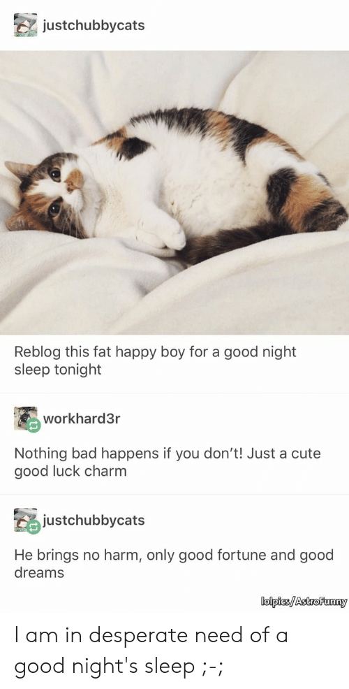 astro: justchubbycats  Reblog this fat happy boy for a good night  sleep tonight  workhard3r  Nothing bad happens if you don't! Just a cute  good luck charm  justchubbycats  He brings no harm, only good fortune and good  dreams  lolpics/Astro Funny I am in desperate need of a good night's sleep ;-;
