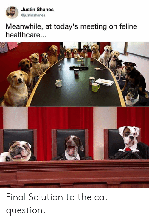 feline: Justin Shanes  @justinshanes  Meanwhile, at today's meeting on feline  healthcare... Final Solution to the cat question.