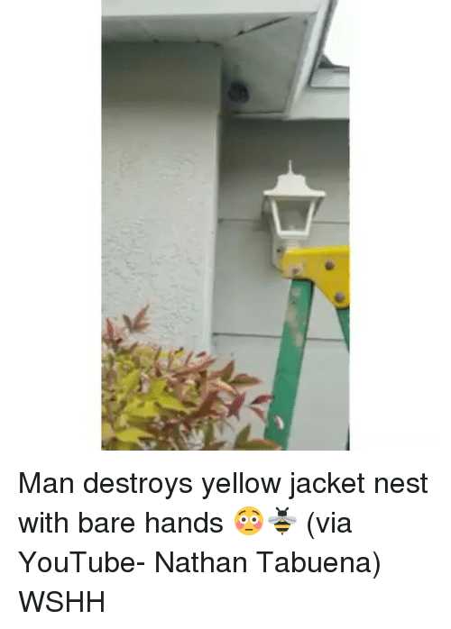 yellow jackets: K  ㄈ Man destroys yellow jacket nest with bare hands 😳🐝 (via YouTube- Nathan Tabuena) WSHH