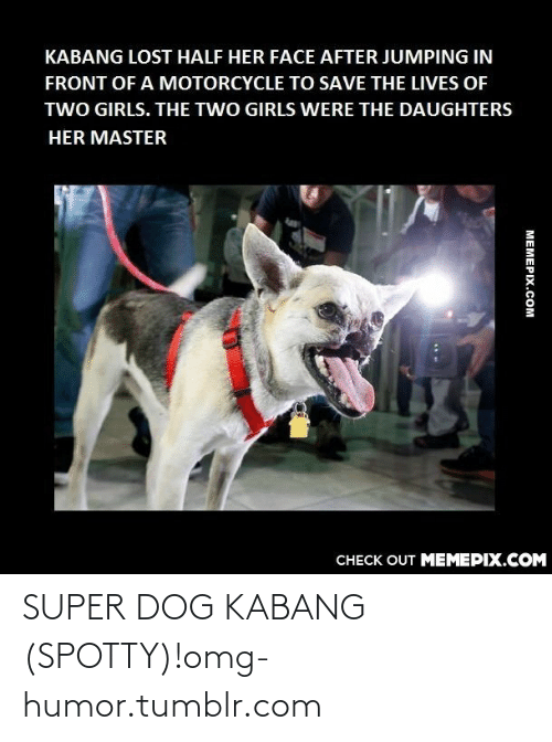 Girls, Omg, and Tumblr: KABANG LOST HALF HER FACE AFTER JUMPING IN  FRONT OF A MOTORCYCLE TO SAVE THE LIVES OF  TWO GIRLS. THE TWO GIRLS WERE THE DAUGHTERS  HER MASTER  CHECK OUT MEMEPIX.COM  MEMEPIX.COM SUPER DOG KABANG (SPOTTY)!omg-humor.tumblr.com