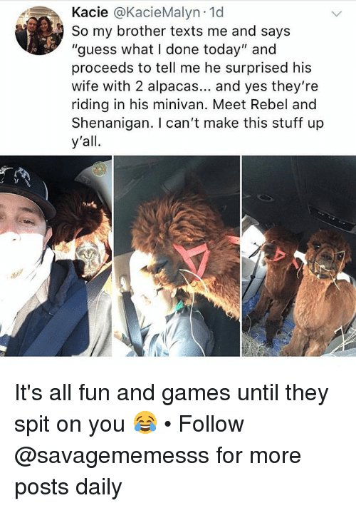 """Memes, Games, and Guess: Kacie @KacieMalyn.1d  So my brother texts me and says  """"guess what I done today"""" and  proceeds to tell me he surprised his  wife with 2 alpacas... and yes they're  riding in his minivan. Meet Rebel and  Shenanigan. I can't make this stuff up  y'all. It's all fun and games until they spit on you 😂 • Follow @savagememesss for more posts daily"""