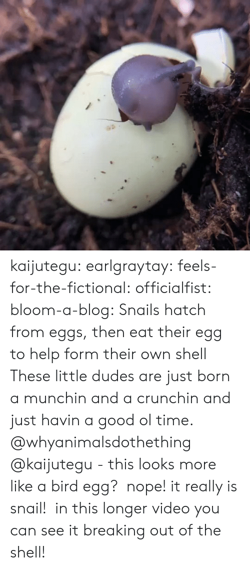 Fictional: kaijutegu: earlgraytay:  feels-for-the-fictional:  officialfist:  bloom-a-blog:  Snails hatch from eggs, then eat their egg to help form their own shell  These little dudes are just born a munchin and a crunchin and just havin a good ol time.    @whyanimalsdothething @kaijutegu - this looks more like a bird egg?   nope! it really is snail!  in this longer video you can see it breaking out of the shell!