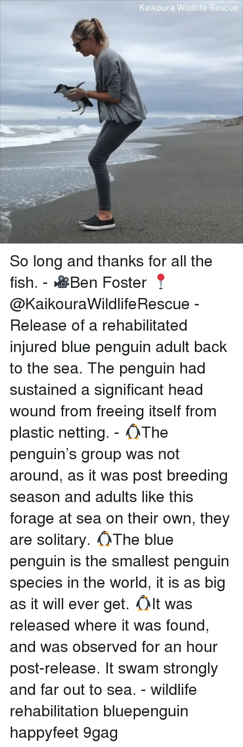Far Out: Kaikoura Wildlife Rescue So long and thanks for all the fish. - 🎥Ben Foster 📍@KaikouraWildlifeRescue - Release of a rehabilitated injured blue penguin adult back to the sea. The penguin had sustained a significant head wound from freeing itself from plastic netting. - 🐧The penguin's group was not around, as it was post breeding season and adults like this forage at sea on their own, they are solitary. 🐧The blue penguin is the smallest penguin species in the world, it is as big as it will ever get. 🐧It was released where it was found, and was observed for an hour post-release. It swam strongly and far out to sea. - wildlife rehabilitation bluepenguin happyfeet 9gag