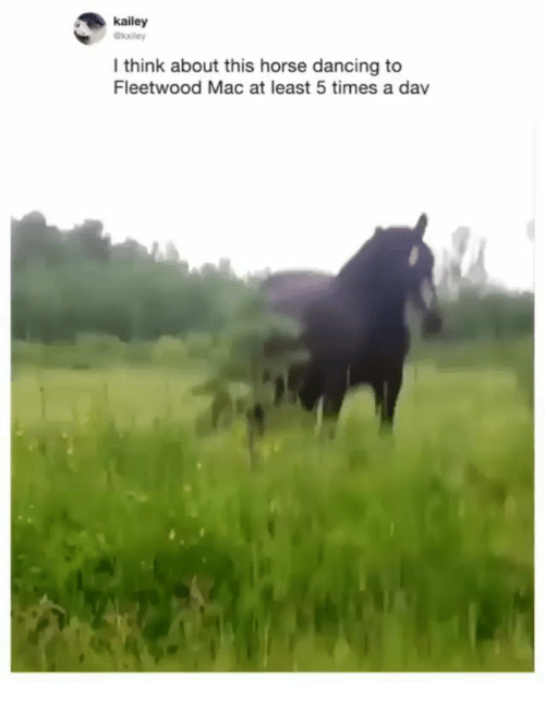 Dancing, Memes, and Horse: kailey  Gkooley  l think about this horse dancing to  Fleetwood Mac at least 5 times a dav