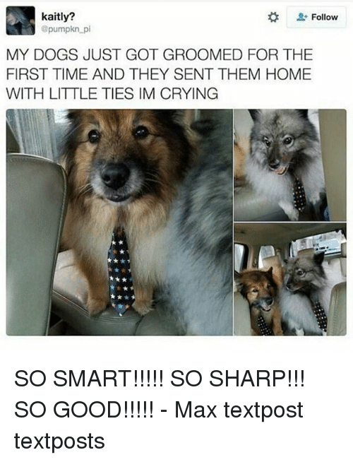 Memes, 🤖, and Sharp: kaitly?  Follow  @pumpkn pi  MY DOGS JUST GOT GROOMED FOR THE  FIRST TIME AND THEY SENT THEM HOME  WITH LITTLE TIES IM CRYING SO SMART!!!!! SO SHARP!!! SO GOOD!!!!! - Max textpost textposts