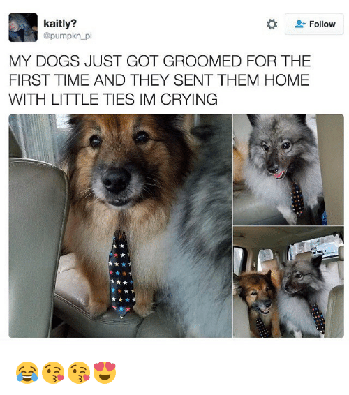 Crying, Dogs, and Memes: kaitly?  Follow  @pumpkn pi  MY DOGS JUST GOT GROOMED FOR THE  FIRST TIME AND THEY SENT THEM HOME  WITH LITTLE TIES IM CRYING 😂😘😘😍