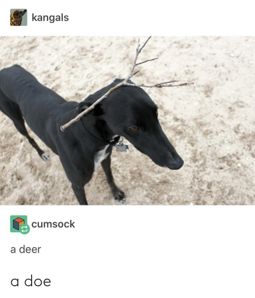 doe: kangals  cumsock  a deer a doe