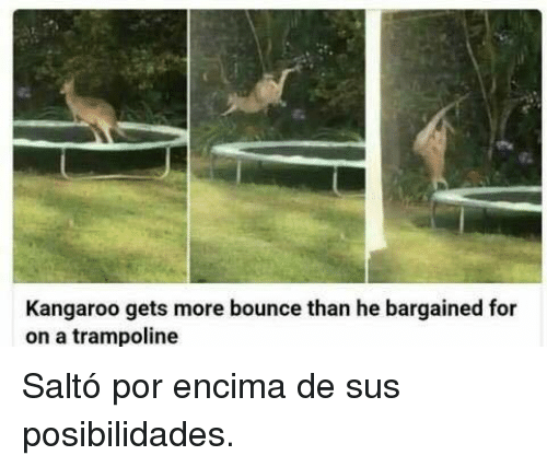 Trampoline, Kangaroo, and For: Kangaroo gets more bounce than he bargained for  on a trampoline <p>Saltó por encima de sus posibilidades.</p>