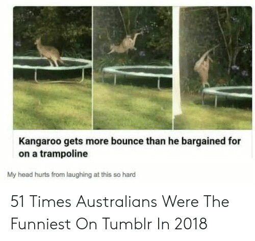 Trampoline: Kangaroo gets more bounce than he bargained for  on a trampoline  My head hurts from laughing at this so hard 51 Times Australians Were The Funniest On Tumblr In 2018