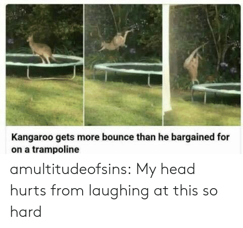 kangaroo: Kangaroo gets more bounce than he bargained for  on a trampoline amultitudeofsins: My head hurts from laughing at this so hard