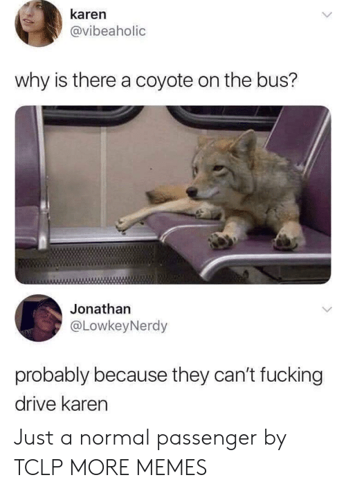 Coyote: karen  @vibeaholic  why is there a coyote on the bus?  Jonathan  @LowkeyNerdy  probably because they can't fucking  drive karen Just a normal passenger by TCLP MORE MEMES