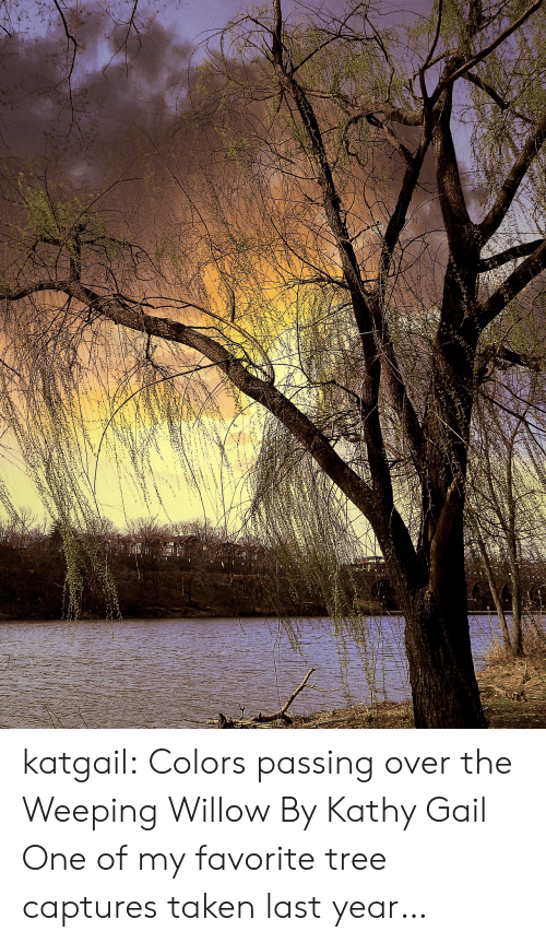 gail: katgail: Colors passing over the Weeping Willow  By Kathy Gail  One of my favorite tree captures taken last year…