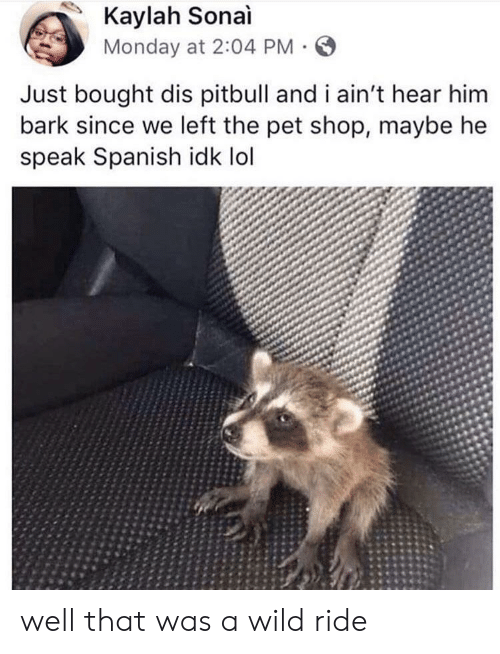 Wild Ride: Kaylah Sonai  Monday at 2:04 PM  Just bought dis pitbull and i ain't hear him  bark since we left the pet shop, maybe he  speak Spanish idk lol well that was a wild ride