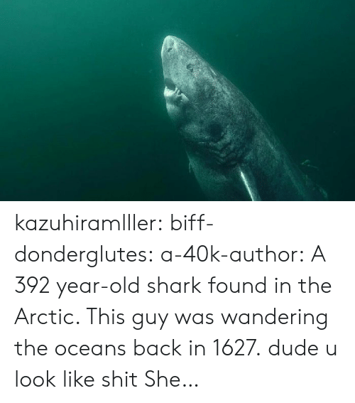 wandering: kazuhiramlller: biff-donderglutes:   a-40k-author: A 392 year-old shark found in the Arctic. This guy was wandering the oceans back in 1627. dude u look like shit   She…