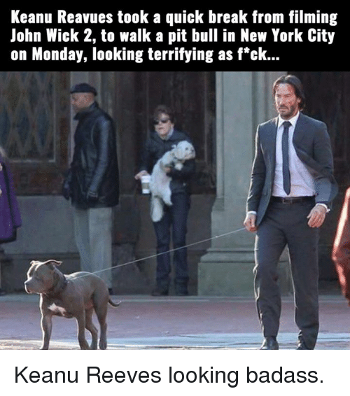 John Wick 2: Keanu Reavues took a quick break from filming  John Wick 2, to walk a pit bull in New York City  on Monday, looking terrifying as f*ck... Keanu Reeves looking badass.