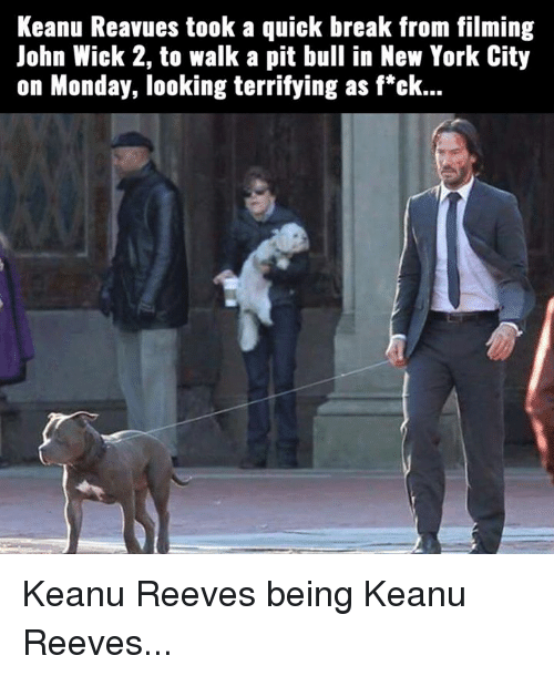John Wick 2: Keanu Reavues took a quick break from filming  John Wick 2, to walk a pit bull in New York City  on Monday, looking terrifying as f*ck... Keanu Reeves being Keanu Reeves...