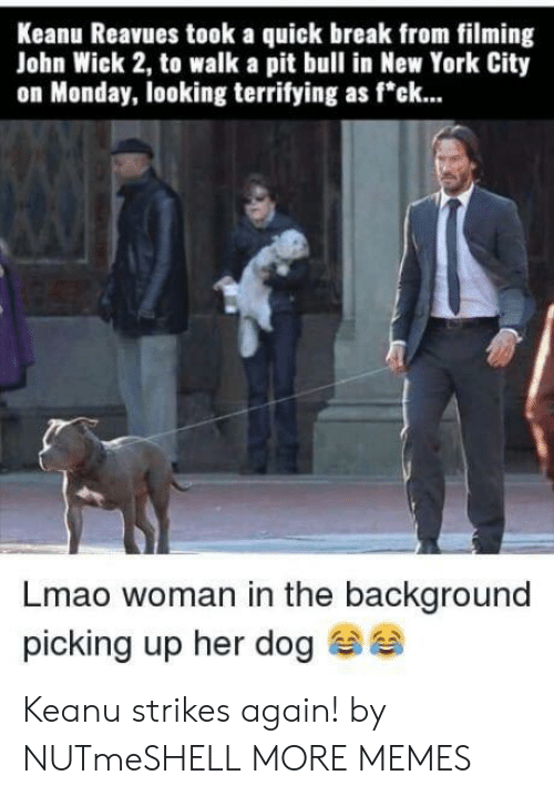 """New York City: Keanu Reavues took a quick break from filming  John Wick 2, to walk a pit bull in New York City  on Monday, looking terrifying as f""""ck...  Lmao woman in the background  picking up her dog Keanu strikes again! by NUTmeSHELL MORE MEMES"""