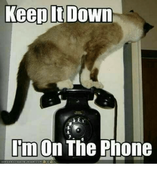 On The Phone: Keep It Down  I'm On The Phone