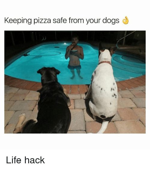 Life Hacke: Keeping pizza safe from your dogs Life hack