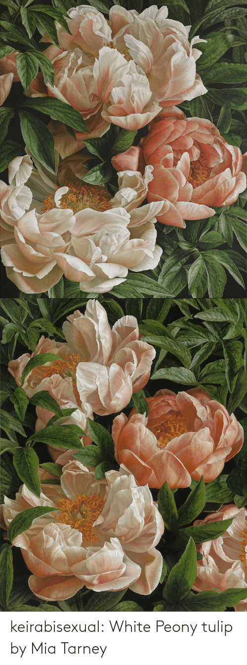 Paintings: keirabisexual: White Peony tulip by Mia Tarney