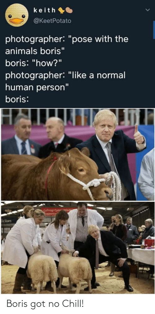 "No chill: keith O  @KeetPotato  photographer: ""pose with the  animals boris""  boris: ""how?""  photographer: ""like a normal  human person""  boris:  Cefnogi Cym  upportin  icitors Boris got no Chill!"
